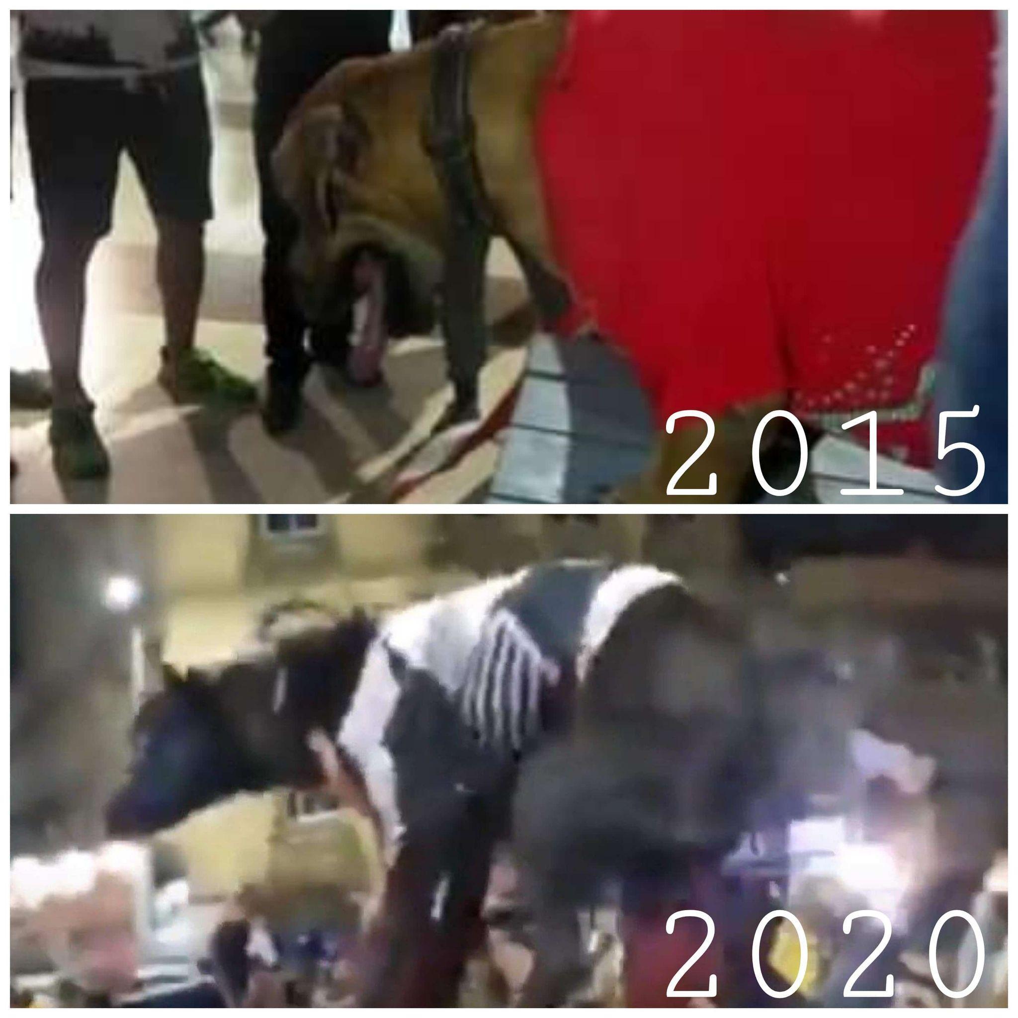 مافعله جماهير الأهلى فى واقعة الكلب كان ردة فعل لما حدث سابقاً مع الزمالك